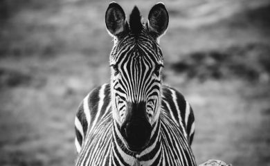 Living with Addison's Disease makes us medical zebras.