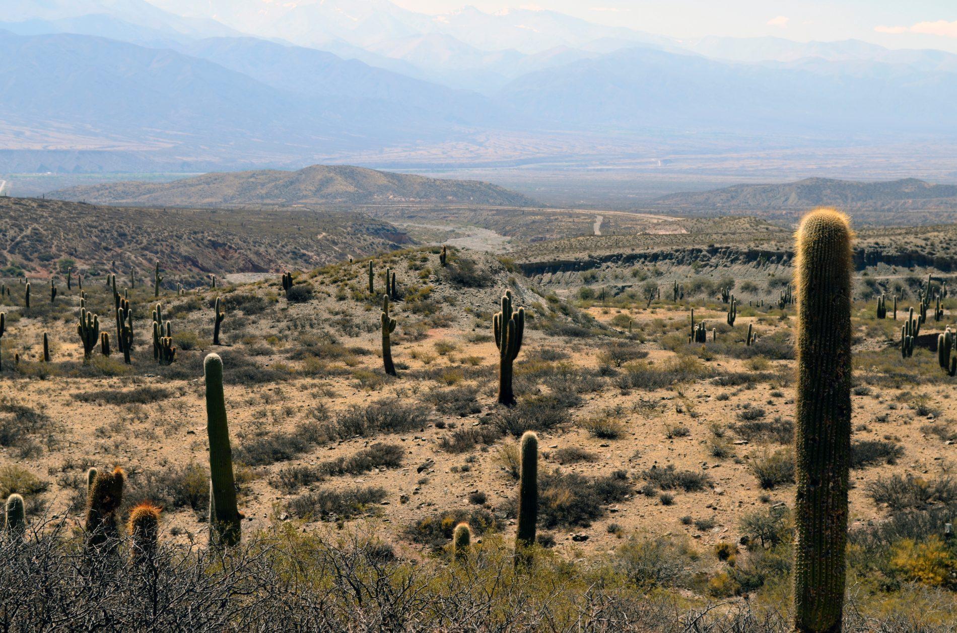 A Dangerous 5K – Estrella Foothills