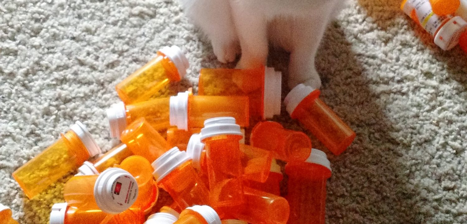 A cat stands behind a large pile of empty medicine pill bottles, some used to contain generic hydrocortisone.