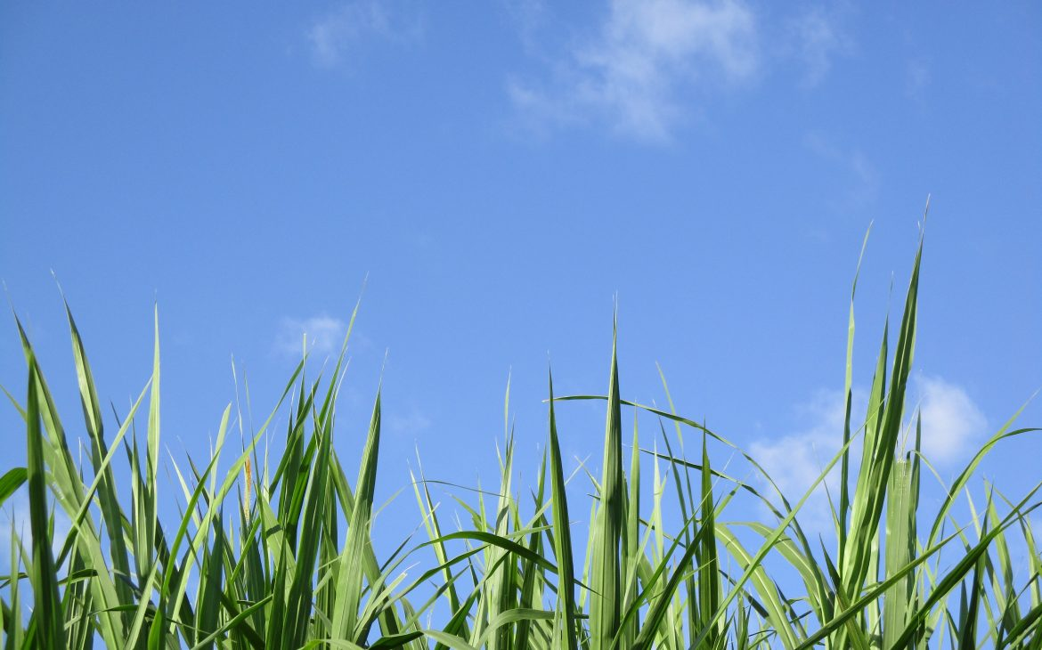 green blades of grass with a clear blue sky as a background
